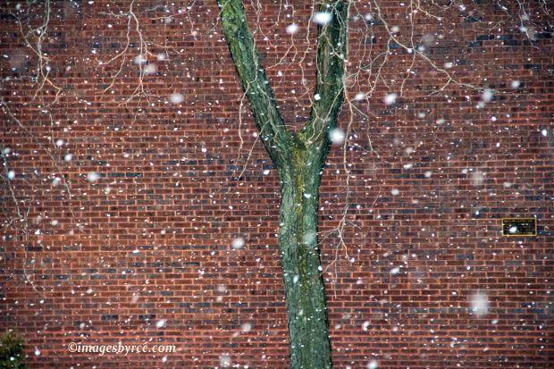 Yesterday's Snow Flurries