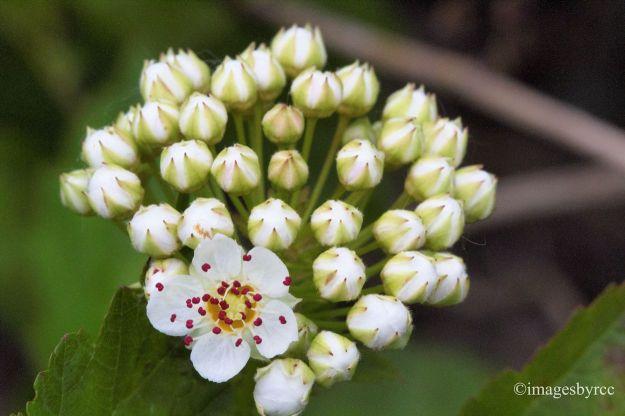 Little Buds Little Flower