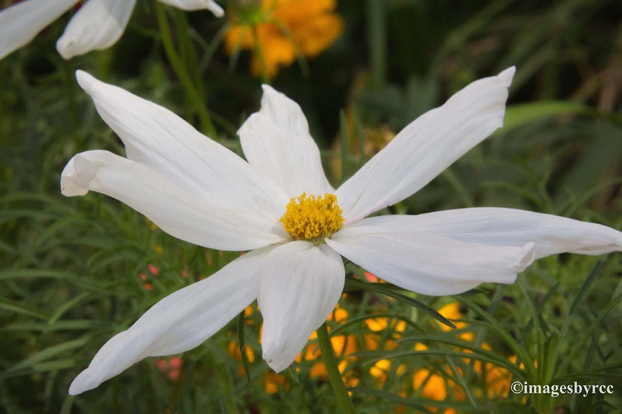 White Flower Letting My Photos Speak For Me