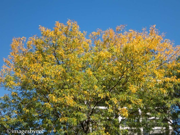 Bright Leaves Against Blue Sky