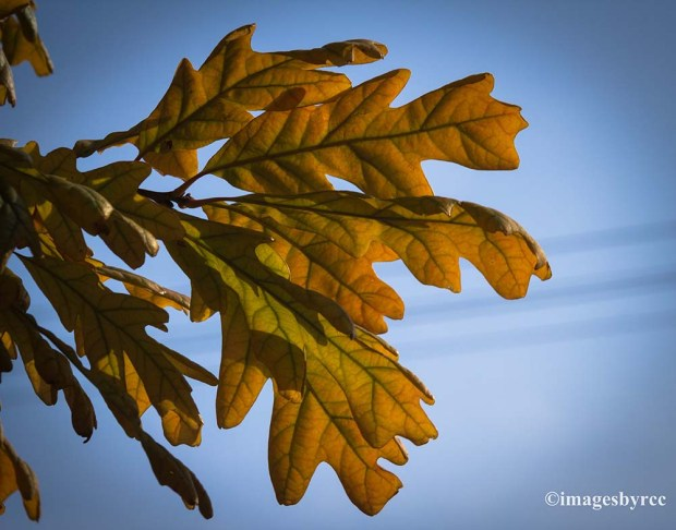 Standout Leaves
