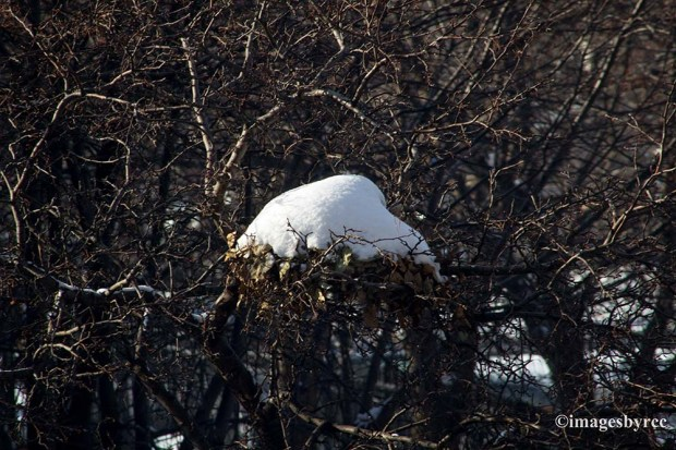 Covered Nest