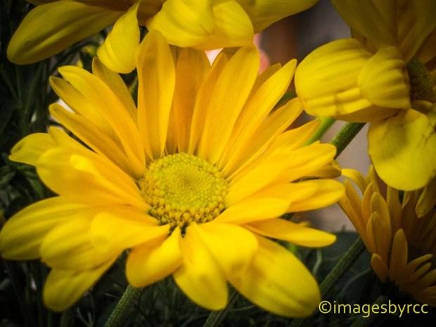 Weekly Photo Challenge Yellow