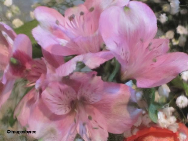 Painted Pink Lilies